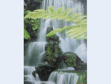 Wandbild Wasserfall mit Farn